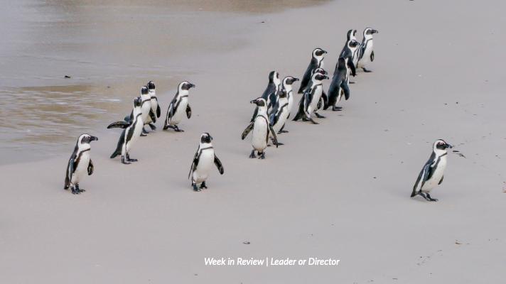 Leader or Director